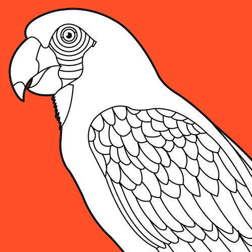 Colorir um papagaio
