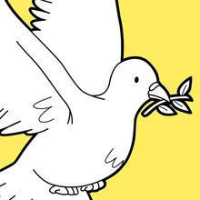 O vôo da pomba da paz