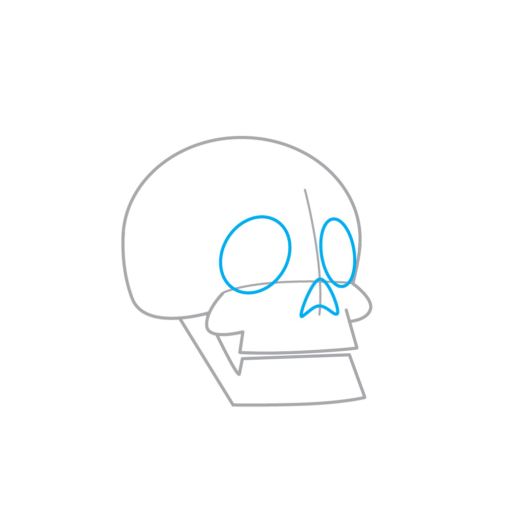 O Crânio