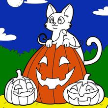 Gato, Abóbora, Dia Das Bruxas